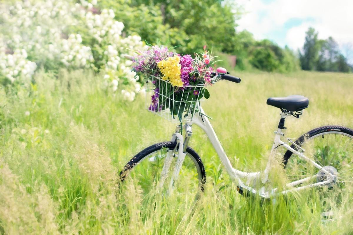 Palabra del día – la bicicleta